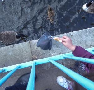 Feeding a Pigeon